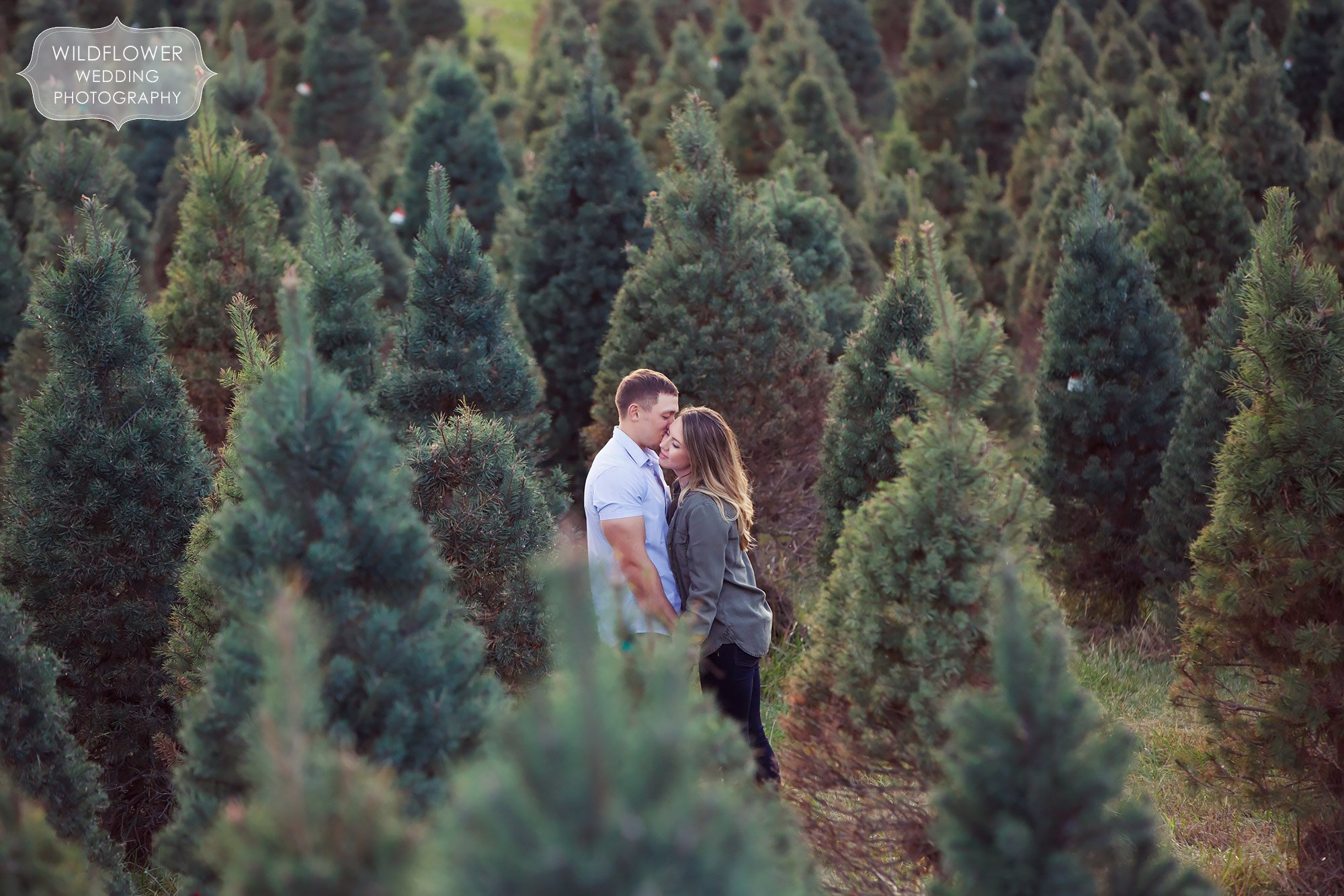 Couple holding hands in the middle of pine trees at the Timberview Christmas Tree farm in Hartsburg, MO.