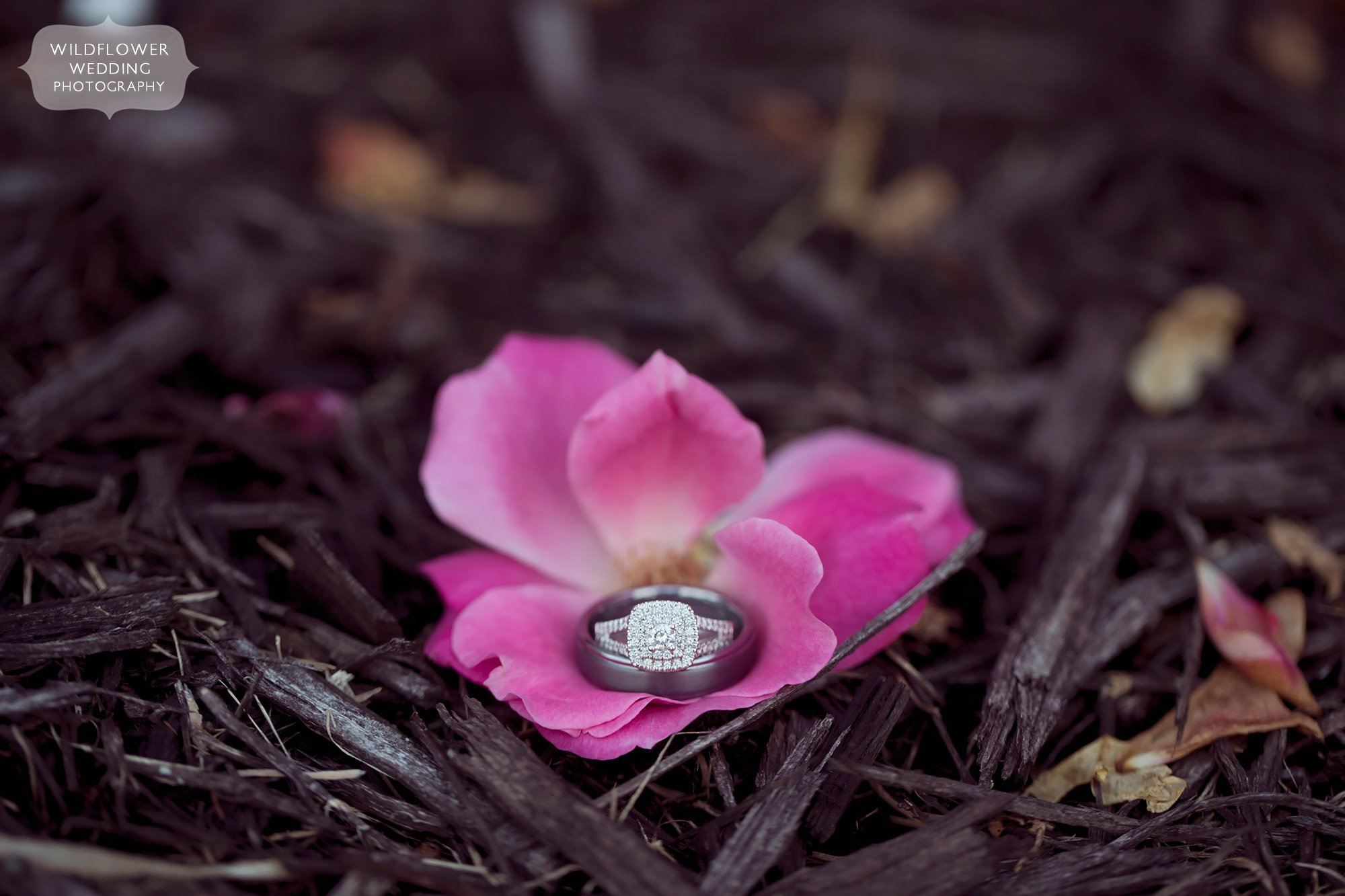 Wedding rings in a pink rose petals at the Jeff City Country Club in MO.