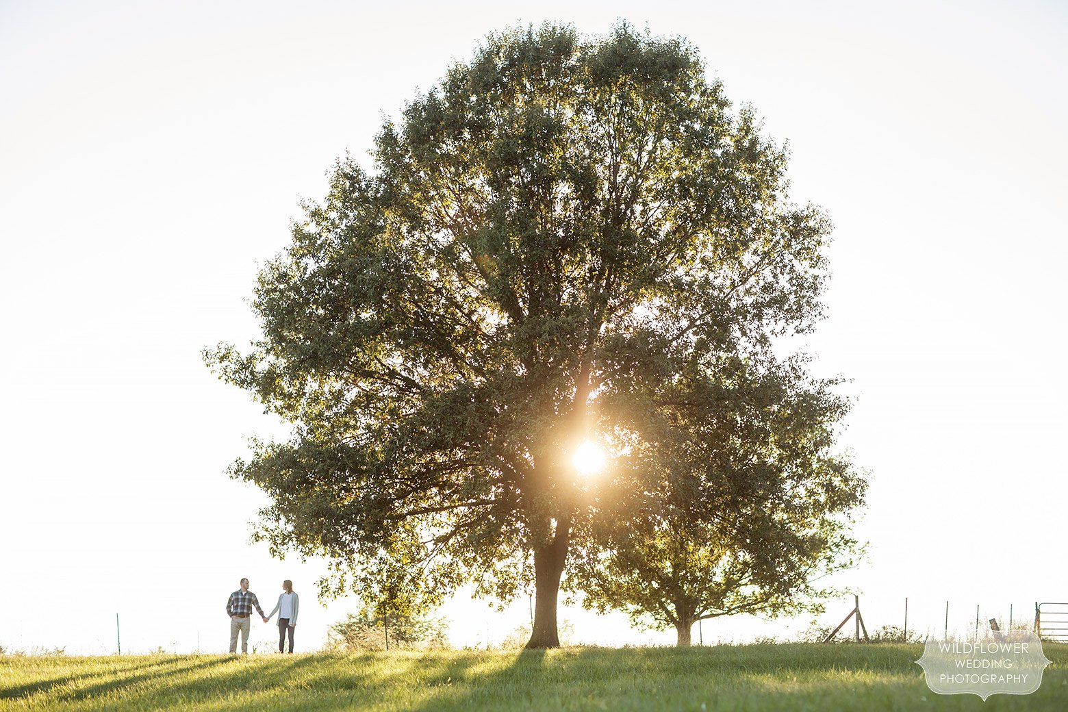 Scenic photo of the couple standing under a giant tree at sunset in Boonville, MO.