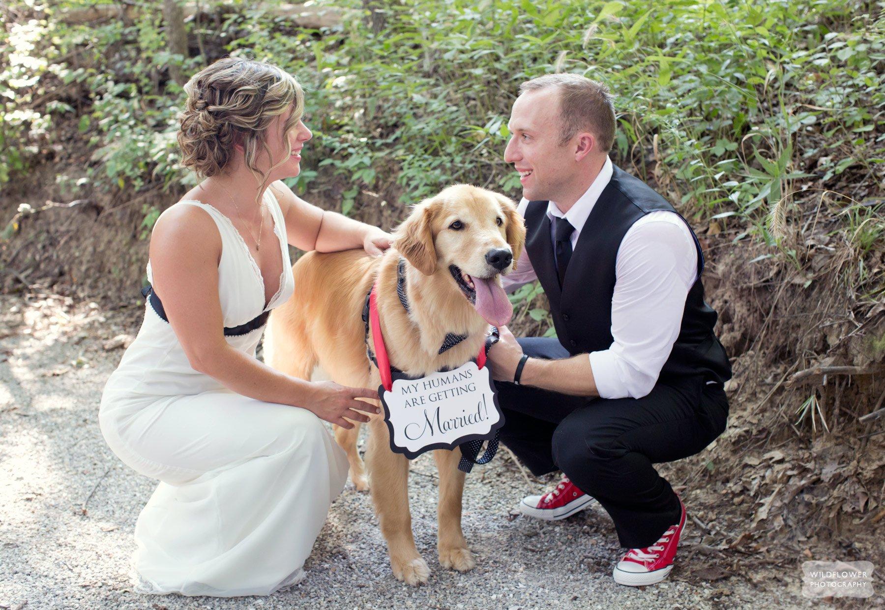 les-bourgeois-wedding-dog-photo