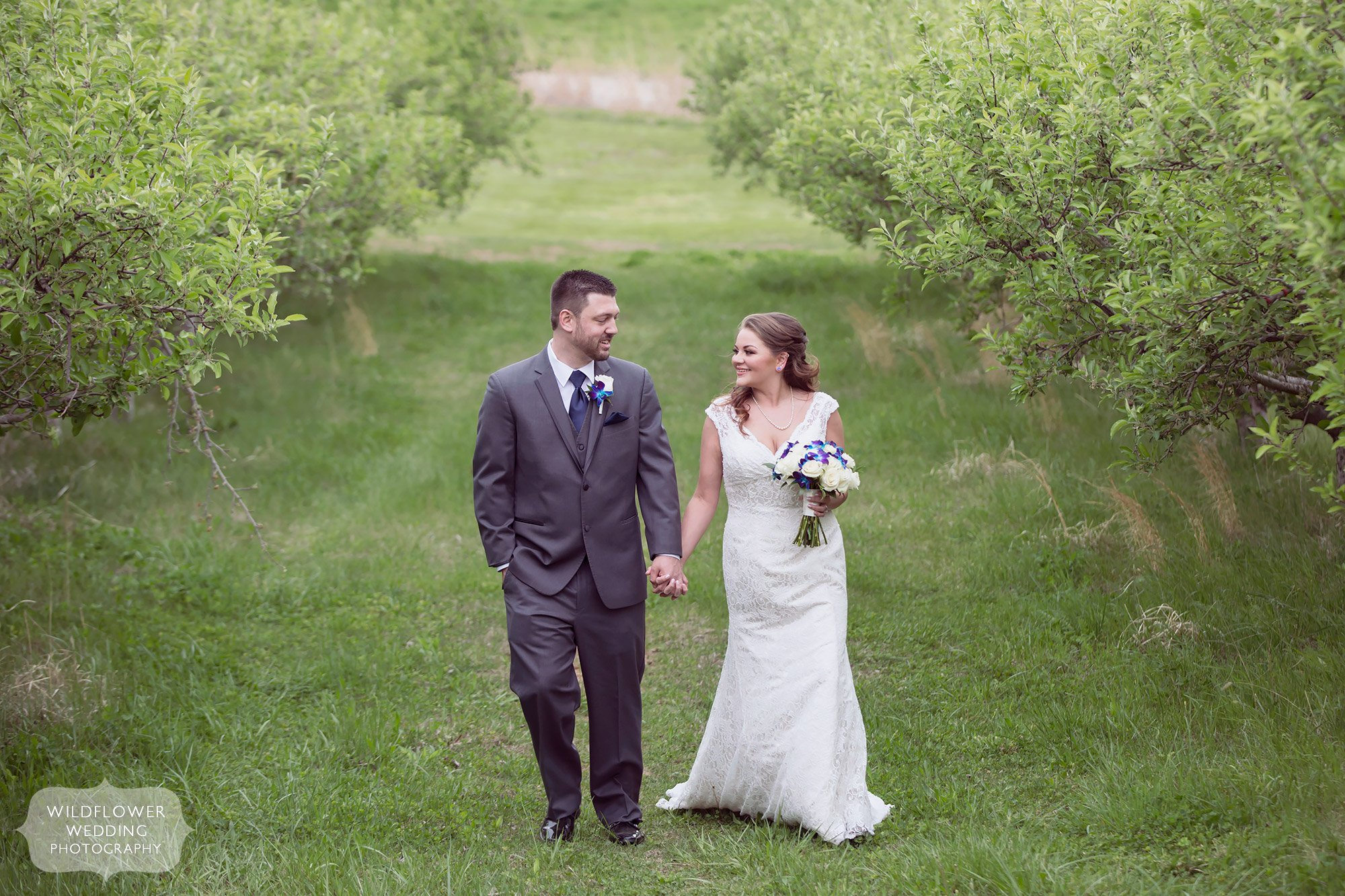 Bride and groom walk through the apple orchards at the Weston Red Barn Farm.
