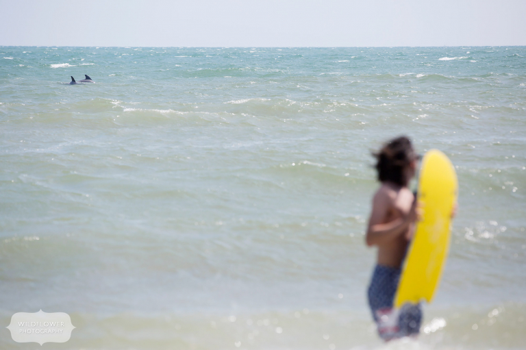 A man holds a boogie board on St. George Island while dolphins swim behind him.